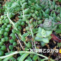 朝の庭 この花の名前は(  -_・)? お手入れ…(7枚目)