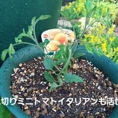朝の庭 この花の名前は(  -_・)? お手入れ…(4枚目)