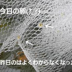 可動式メダカの水槽 大工仕事は大雑把だけど、何とか形になりま…(9枚目)