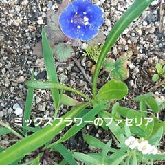 花、咲きました🎵 土手カボチャと言うくらいだから、どこでも…(4枚目)