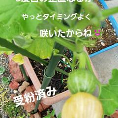 多肉棚便り 覚えられない名前の花が 咲きました🎵 身…(3枚目)