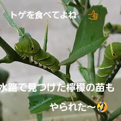 「虫シリーズ~🎶 今年はカメムシと蝉が少な…」(4枚目)