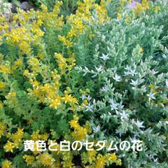 朝の庭 この花の名前は(  -_・)? お手入れ…(5枚目)