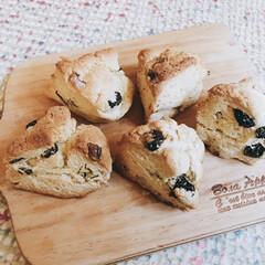 朝食/朝ごはん/ホットケーキミックス/home made/チョコスコーン/レーズンスコーン/... 朝食にスコーン😋