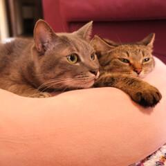キジトラ/グレー猫/保護猫/令和元年フォト投稿キャンペーン/フォロー大歓迎/LIMIAペット同好会/... あれ見て。
