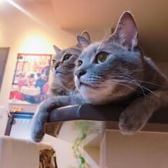 平成最後の一枚/LIMIAペット同好会/にゃんこ同好会/保護猫/猫/キジトラ/... なあ、旅に出ないか?