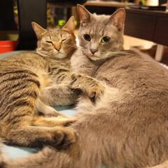 キジトラ/保護猫/グレー猫/令和元年フォト投稿キャンペーン/フォロー大歓迎/LIMIAペット同好会/... なかよし。