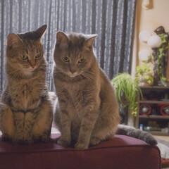 保護猫/グレー猫/キジトラ/令和元年フォト投稿キャンペーン/フォロー大歓迎/LIMIAペット同好会/... 密談。