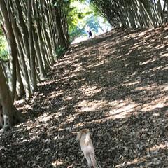 公園/木のトンネル/お出かけワンショット/おでかけワンショット/春のフォト投稿キャンペーン/LIMIAペット同好会/... 木のトンネルでお散歩❤️(2枚目)
