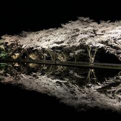 桜/自然/お出かけワンショット/おでかけワンショット/春/おでかけ/... 夜桜。 水面に映る桜は素敵。