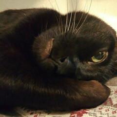 猫派/にゃんこ同好会 あざとさ100%なでろポーズです