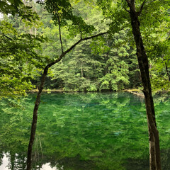 夏のお気に入り 津南のひまわり畑とおいしいお水の水源夏の…