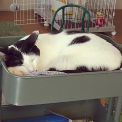 猫と暮らす/IKEA IKEAのロースコグワゴン、上段がすっか…