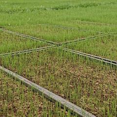東北の春/稲作/暮らし 🍀育苗せんたーにて🍀  おはよーございま…