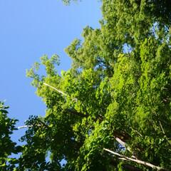 ブナの林/ユネスコエコパーク只見/暮らし 🍀ブナ🍀  平成26年 ユネスコ世界自然…