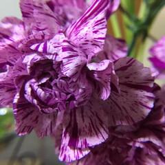 切り花/花のある暮らし/お花大好き 色とりどりの カーネーション 三枚目は昨…(3枚目)