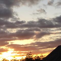 いま空/今日の夕焼け/夕暮れ風景/夕焼け大好き/定点観測 日没 16:51 今日も一日お疲れ様でし…(3枚目)