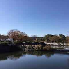 紅葉まつり/日本庭園/大阪 万博/花のある暮らし/お花大好き 青空に映える紅葉が 綺麗でした