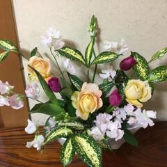 春の花たち 五色盛り💞