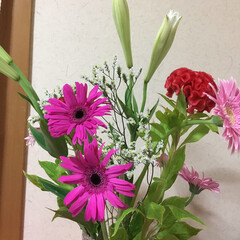 切り花/季節の花/花のある暮らし/お花大好き 7月 2回目切り花 鉄砲百合 ケイトウ …(1枚目)