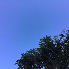 青空/いま空 今日はとても綺麗に澄んだ青空です