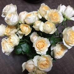 春の花/花のある暮らし アイボリーの可愛い薔薇と 真っ赤アルスト…