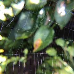 お花大好き 庭の蜘蛛の巣🕸 綺麗だけどキライ