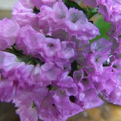 花のあるくらし/お花大好き 切り花 スターチス