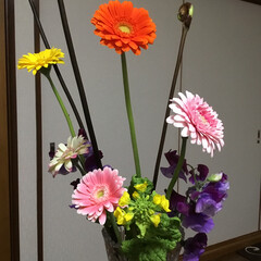 春の花たち マーガレット4色 スイートピー(紫式部)…