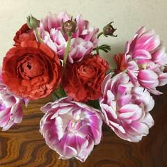 春の花たち チューリップもラナンキュラスも 満開❣️…