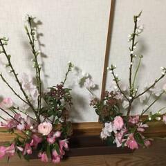 春の花たち 春爛漫💞
