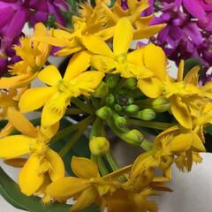 黄色/花のある暮らし エピデンドラム 月曜日の ファイトカラー…