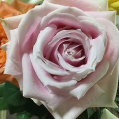 切り花/花のある暮らし/お花大好き 切り花 ピンクの薔薇 ピンクはプリンセス…