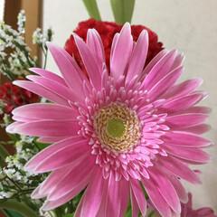 切り花/季節の花/花のある暮らし/お花大好き 7月 2回目切り花 鉄砲百合 ケイトウ …(3枚目)