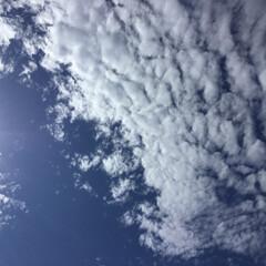 いま空 羊雲 ほんわか雲   この雲が出ると明日…