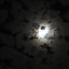 十六夜/昨夜の月 雲間から覗く幻想的な 青い月のひかりに癒…