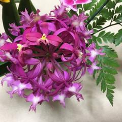 花のある暮らし/住まい/暮らし エピデンドラム 強烈なピンク💞