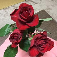 花のある暮らし 真紅の薔薇🌹🌹🌹