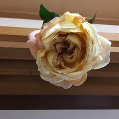 春の花たち キャンディーアンティーク 中には4個の花…