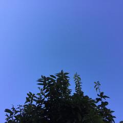青空/いま空 今日はとても綺麗に澄んだ青空です(2枚目)