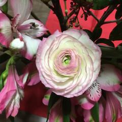 春の花たち ラナンキュラスとアルストロメリア