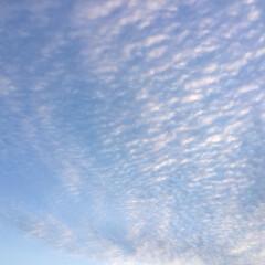 いま空/夕焼け大好き うろこ雲 夕焼け色に染まって 鱗のように…