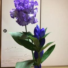 切り花のある生活/切り花/お花大好き 切り花 紫 トルコキキョウとリンドウ