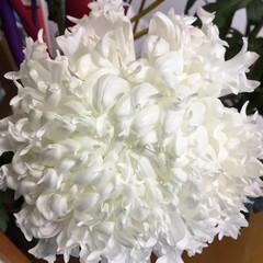切り花/花のあるくらし/お花大好き 白菊 デコラマム アインシュタイン 花先…