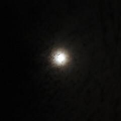 「今宵の月 朧月  明日は十三夜 」(1枚目)