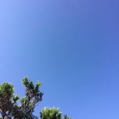 青空/今日の空 雲ひとつない澄み渡る空(1枚目)