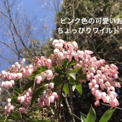 「こちらも梅小路公園から。 ただ今色々咲き…」(1枚目)