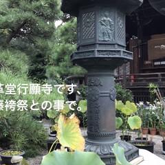 「桔梗のありましたお寺です。」(3枚目)