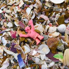 貝/砂浜/海/LIMIAおでかけ部/おでかけ/旅行/... よくぞここまで来ましたのう。