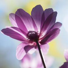 カメラ/おでかけ/自然/お花/LIMIAファンクラブ/おでかけワンショット 自然の影絵🌼🤭
